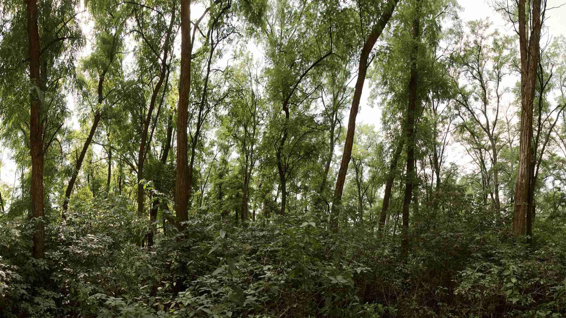 Akátový les